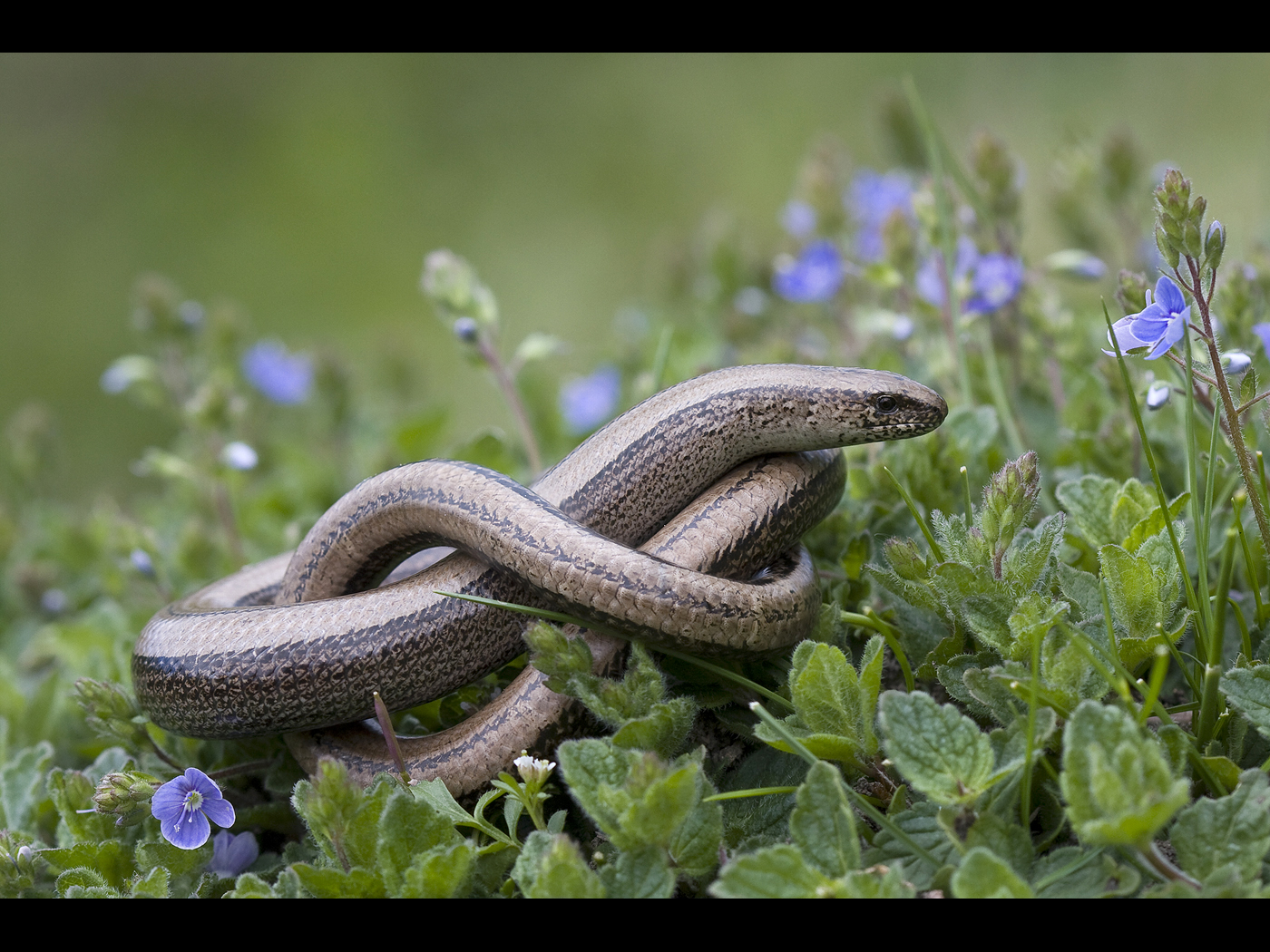 Slow worm warming up